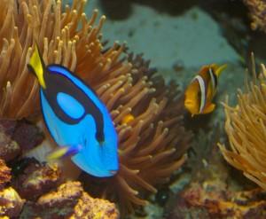 Fra det tropiske akvariet